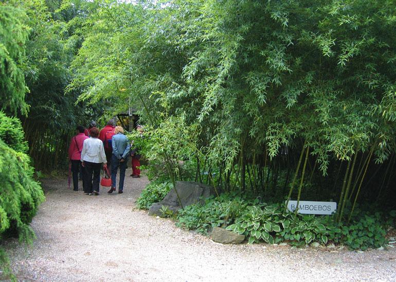 Bamboe hagen bamboekwekerij Kimmei Valkenswaard